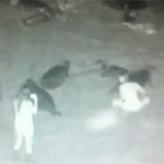 Туристки из сша избили тюленей