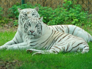 Британский зоопарк